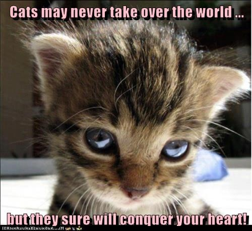 animals world heart over never take conquer caption Cats - 8585333248