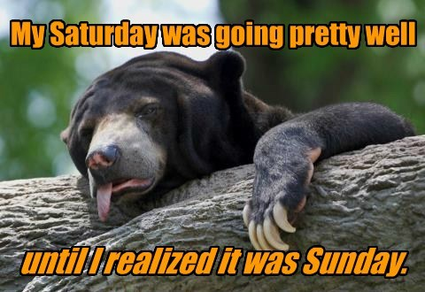 saturday,bear,sunday,problem,mixed up