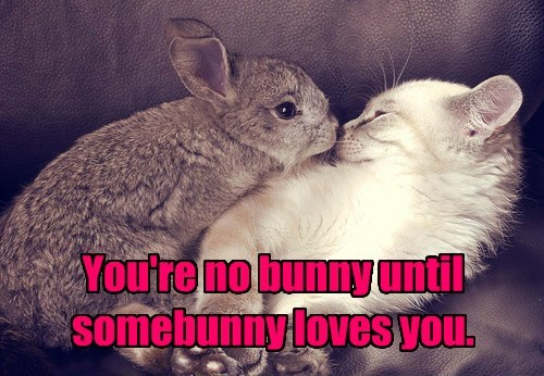puns cute rabbit caption Cats - 8585352704