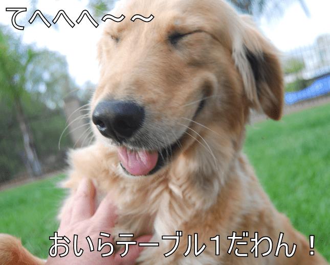 animals - 8585366784
