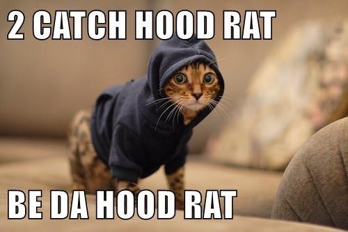 animals hood hoodie caption Cats funny - 8585453056