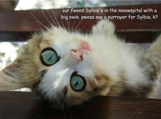 our fwend Sylbia's in the meowspital with a big owie. pweas say a purrayer for Sylbia, k?