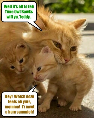 time out naughty kitten caption Cats funny - 8585506304