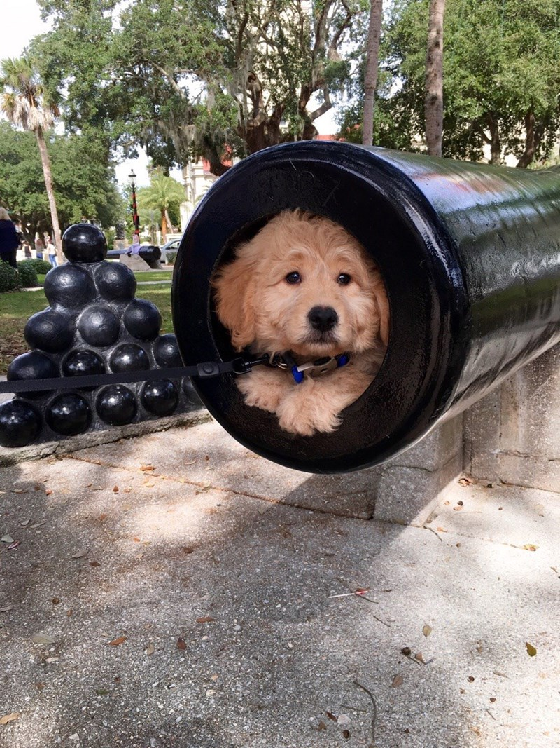 cute dogs image And Now for the Main Event: The Doggie Cannon Ball!