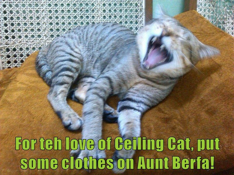 aunt bertha,ceiling cat,Cats,funny