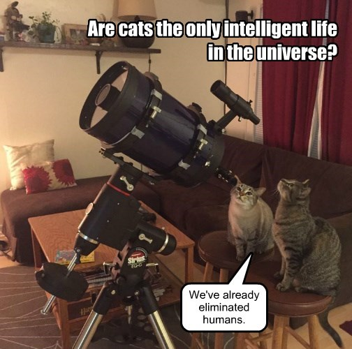 Are cats the only intelligent life in the universe? We've already eliminated humans.