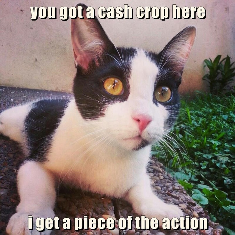 you got a cash crop here  i get a piece of the action