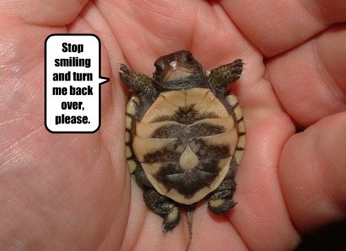 turtle - 8586052864