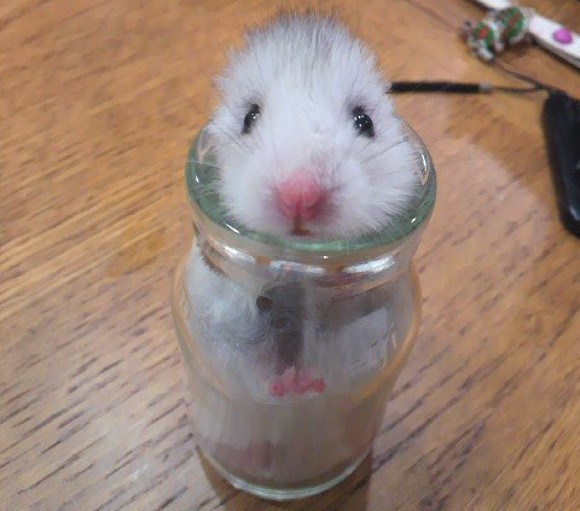 cute hamster image This Hamster Literally Bottled Up His Feelings During an Earthquake