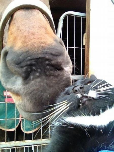 funny cats horses Taking a Selfie to Show Social Media That We're In Love