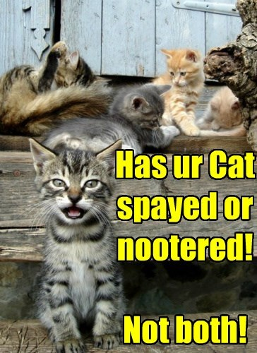 neutered,caption,Cats,funny