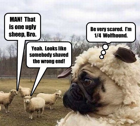 MAN!  That  is one ugly sheep, Bro.