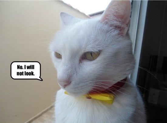 No. I will not look.