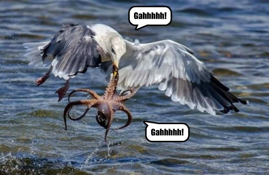 octopus,seagull,funny,animals