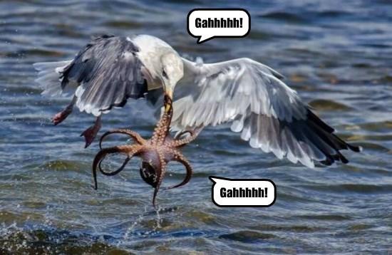 octopus seagull funny animals
