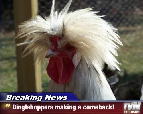 Breaking News - Dinglehoppers making a comeback!