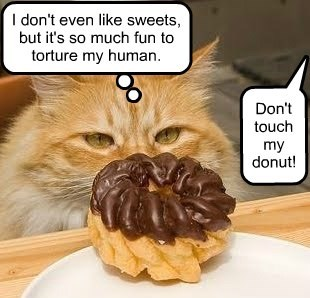 donuts stealing Cats funny - 8586585088