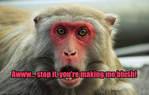 modesty blush monkey funny animals - 8586648064