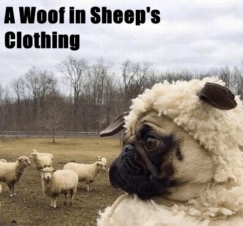 animals woof clothing caption wolf - 8586676480