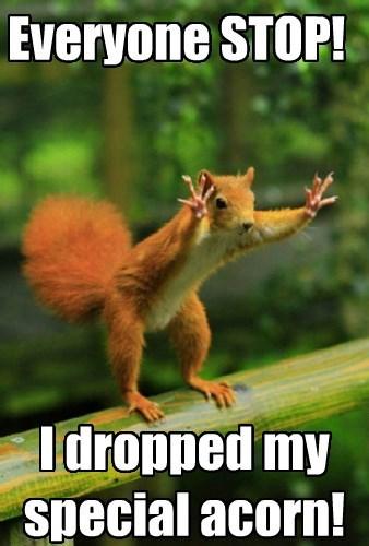 squirrel acorn funny animals - 8586699264