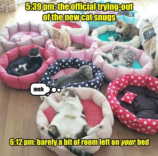 FAIL,meh,cat bed,caption,Cats,funny