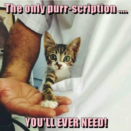 The only purr-scription .... YOU'LL EVER NEED!