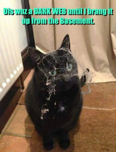 basement cat dark web basement dust Cats