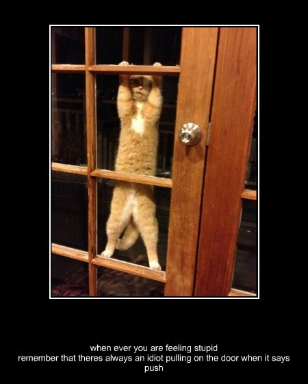 door idiots caption Cats funny stupid - 8586877952