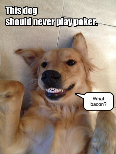 dogs,play,caption,poker,shouldnt