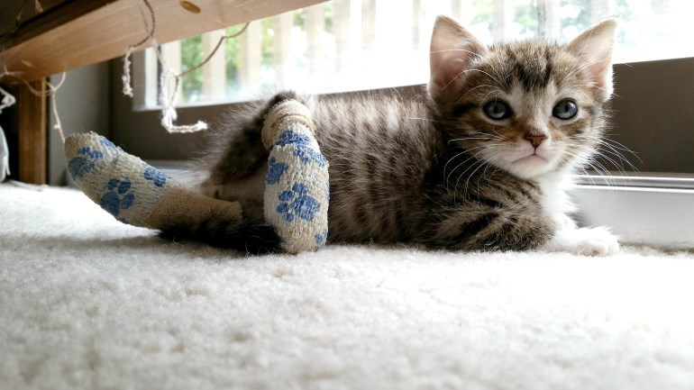 kitten cute Photo squee rescue - 8586889984