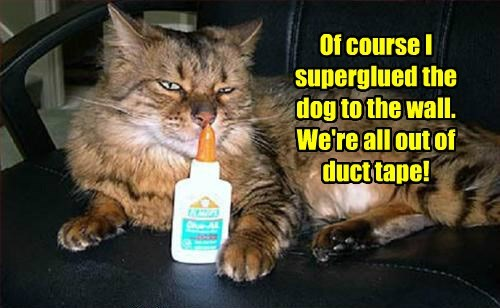 dogs superglue caption funny - 8587009792
