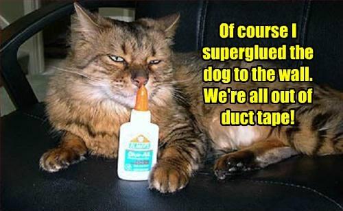 dogs superglue caption funny - 8587009792