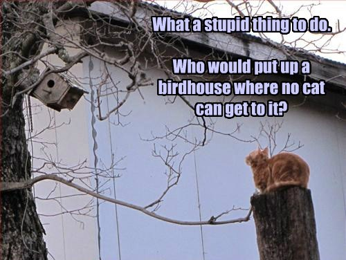 What a stupid thing to do. Who would put up a birdhouse where no cat can get to it?