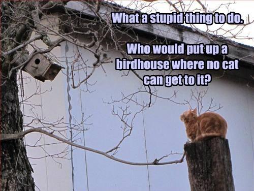 birds caption Cats funny birdhouse
