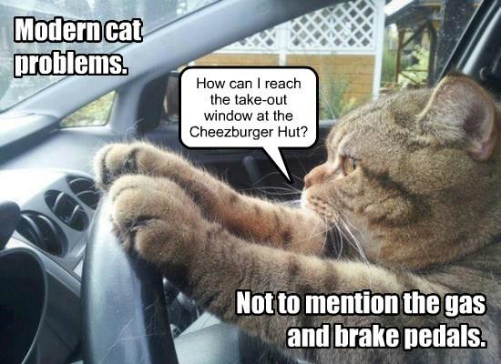 Modern cat problems.