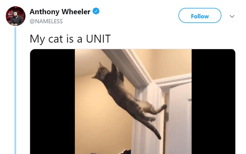Cat doing pull ups