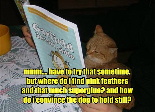 dogs,garfield,super glue,feathers,prank,Cats,funny