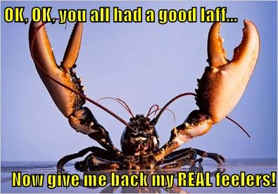 OK, OK, you all had a good laff...  Now give me back my REAL feelers!
