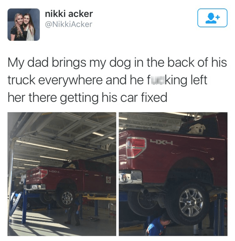 funny memes dog in truck at mechanics