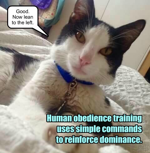 Human obedience training. - Lolcats - lol | cat memes | funny cats | funny  cat pictures with words on them | funny pictures | lol cat memes | lol cats