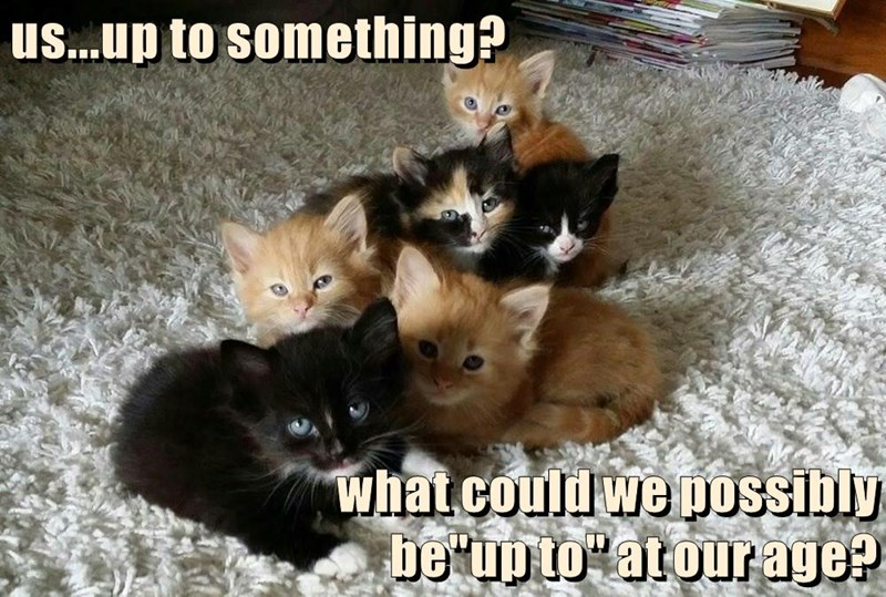 """us...up to something?  what could we possibly                                                         be""""up to"""" at our age?"""