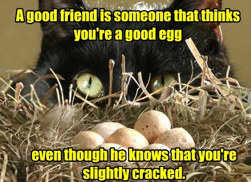 cat cracked friend egg good caption knows - 8587573760