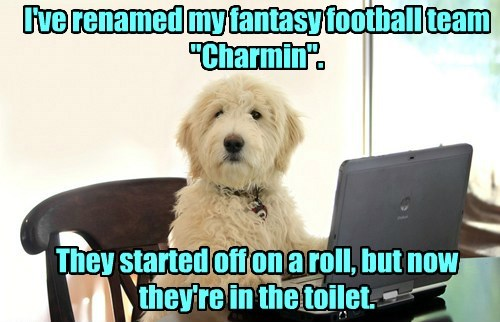 dogs football caption funny