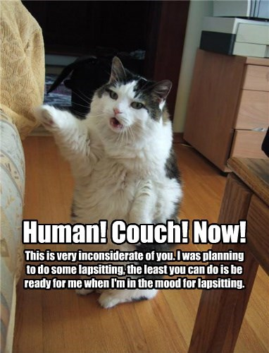 lap,cat,inconsiderate,couch,now,human,sitting,planning