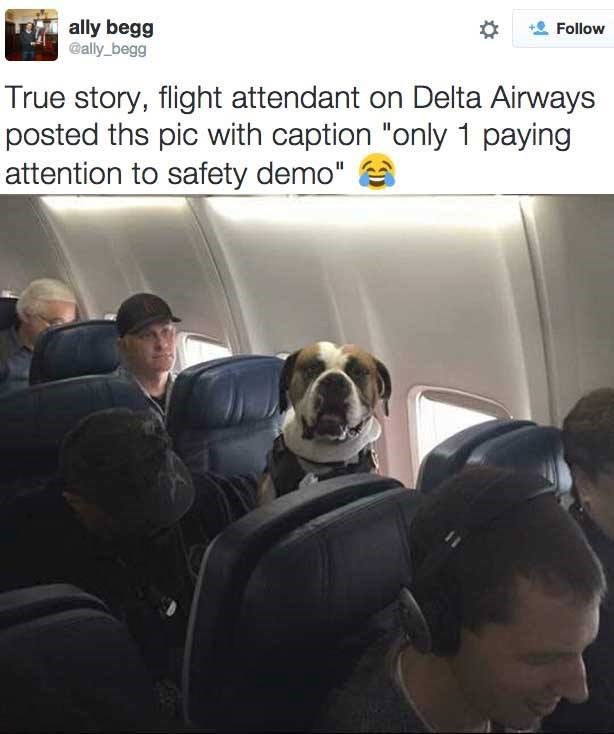 This Dog Takes Safety Seriously