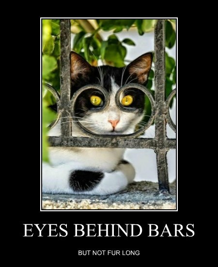 EYES BEHIND BARS