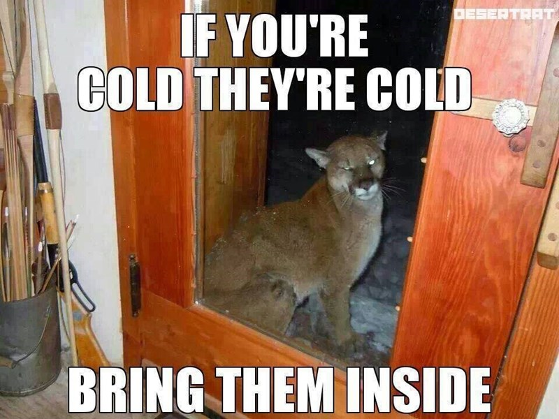 funny memes if youre cold theyre cold