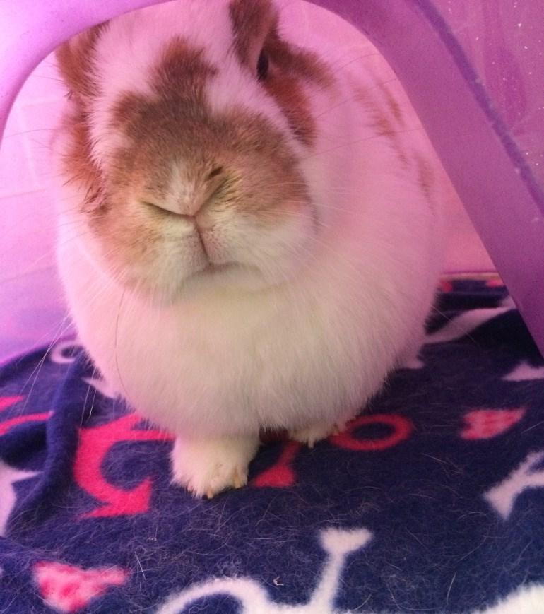Grumpy Rabbit