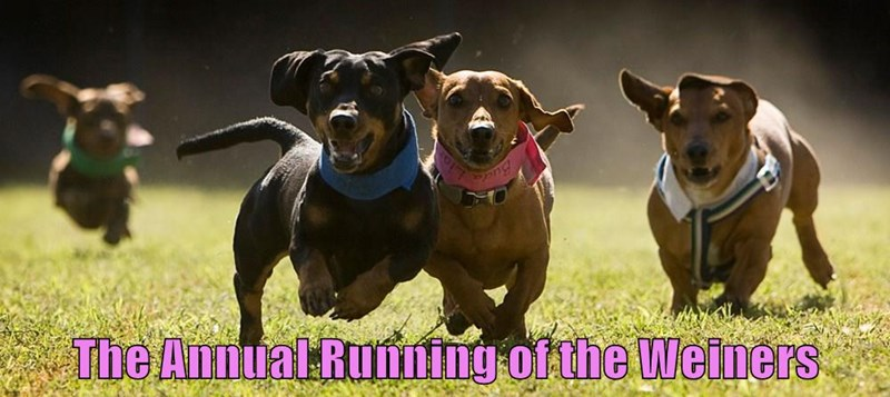 animals dogs running caption funny - 8587927808