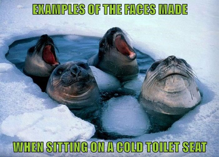 animals seal cold toilet toilet seat
